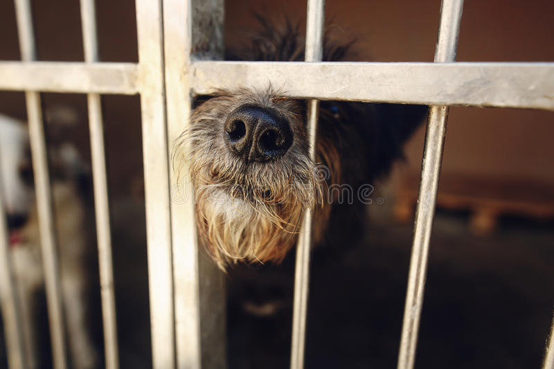cute little dog puppy ponting nose in shelter cage, sad emotional moment, adopt me concept, space for text. royalty free stock images