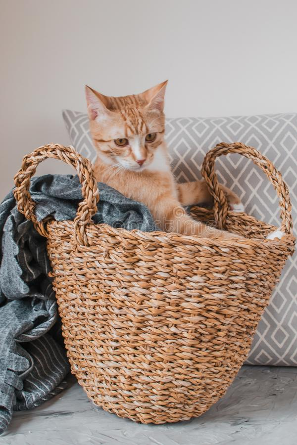 Cute little ginger cat laying in gray blanket at home. Relax time stock image