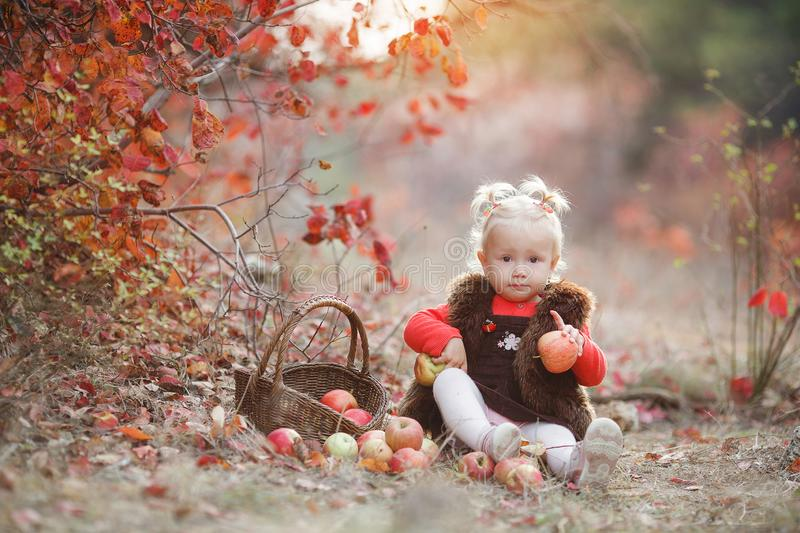 Cute little girl with a basket of red apples in the fall in the park. Child picking apples in autumn.Little baby girl playing in apple tree orchard.Kids pick stock images