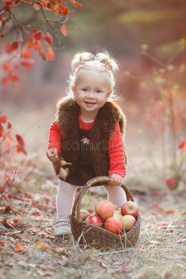 Cute little girl with a basket of red apples in the fall in the park. Child picking apples in autumn.Little baby girl playing in apple tree orchard.Kids pick stock photography