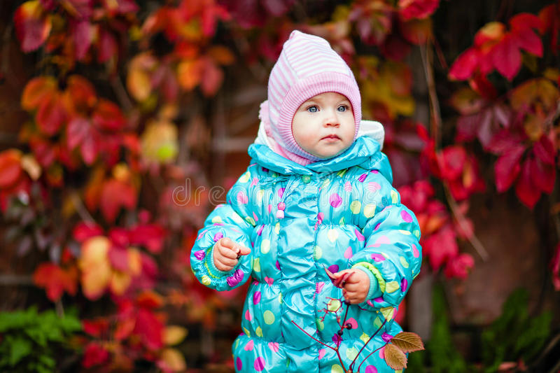 cute little girl in the blue jacket on the background of red vine leaves stock images