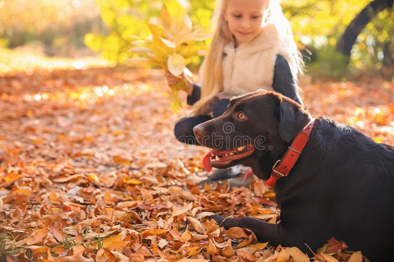 Cute little girl with dog in autumn park royalty free stock photo