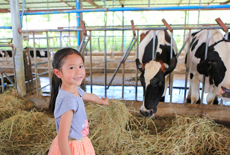 Cute little girl feeding cows by dried straw royalty free stock photos