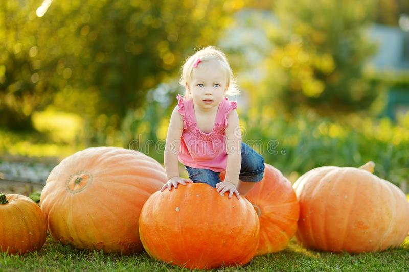 Cute little girl having fun with huge pumpkins on a pumpkin patch. Kid picking pumpkins at country farm on warm autumn day stock images