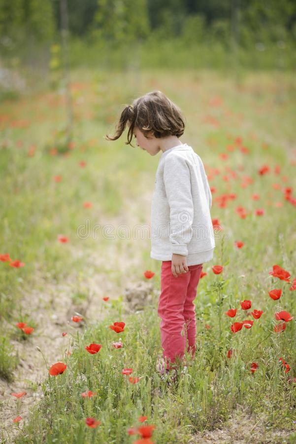 Cute little girl having fun in a poppy field royalty free stock photography
