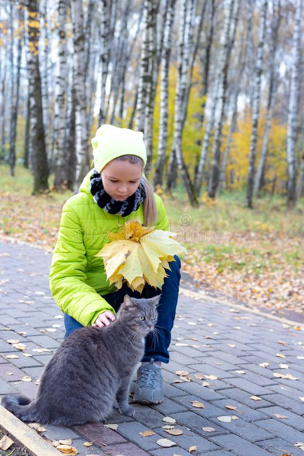 Cute little girl with her cat on sunny autumn day. Adorable child playing with pet kitty. Kids and animals stock photography