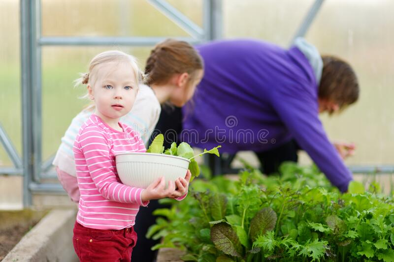 Cute little girl holding a bowl with fresh organic radishes. Child helping in a garden. Fresh healthy organic food for small kids royalty free stock images