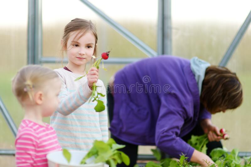 Cute little girl holding fresh organic radish. Child helping in a garden. Fresh healthy organic food for small kids royalty free stock images