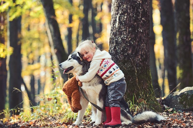 Cute little girl hugging husky dog in park. Good sunny weather, bright sunlight and cute models royalty free stock image