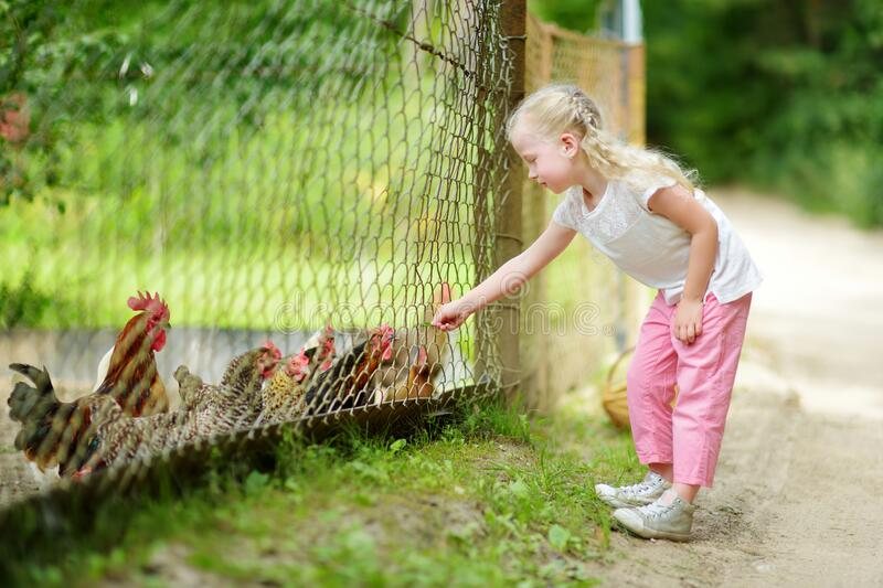 Cute little girl looking at farm chickens through metal fence stock photo