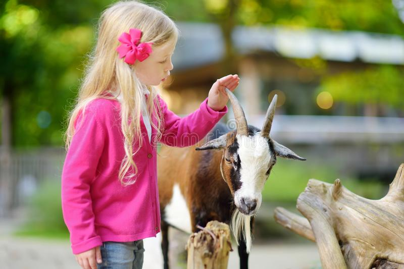 Cute little girl petting and feeding a goat at petting zoo. Child playing with a farm animal on sunny summer day. Kids interacting with animals royalty free stock photography