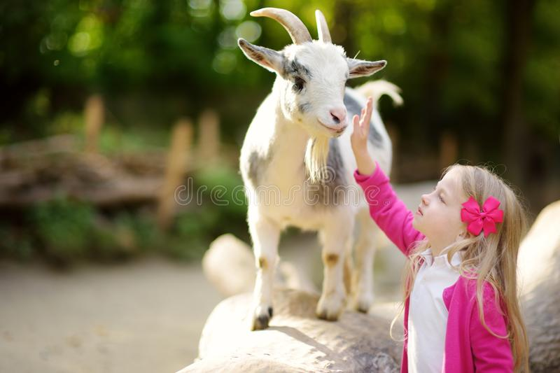 Cute little girl petting and feeding a goat at petting zoo. Child playing with a farm animal on sunny summer day. Kids interacting with animals royalty free stock photo
