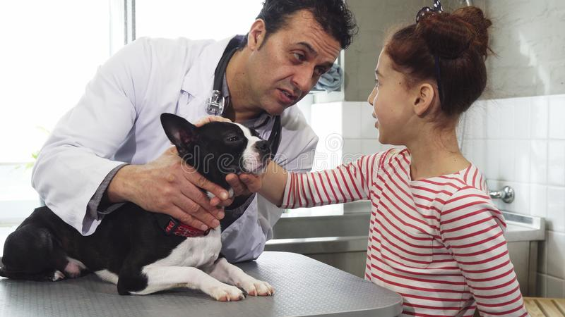 Little girl and her cute dog visiting professional vet at the clinic royalty free stock photo