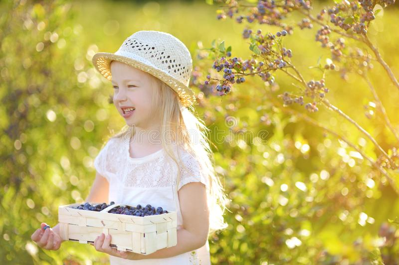 Cute little girl picking fresh berries on organic blueberry farm on warm and sunny summer day. Fresh healthy organic food for kids. Cute little girl picking royalty free stock photo