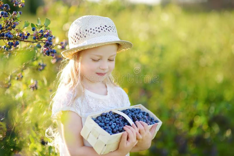 Cute little girl picking fresh berries on organic blueberry farm on warm and sunny summer day. Fresh healthy organic food for kids. Cute little girl picking royalty free stock images