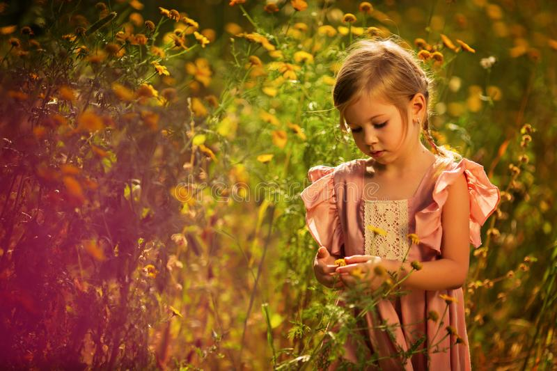 Cute little girl playing in blossoming dahlia field. Child picking fresh flowers in dahlia meadow on sunny summer day. Kid choosin stock photos