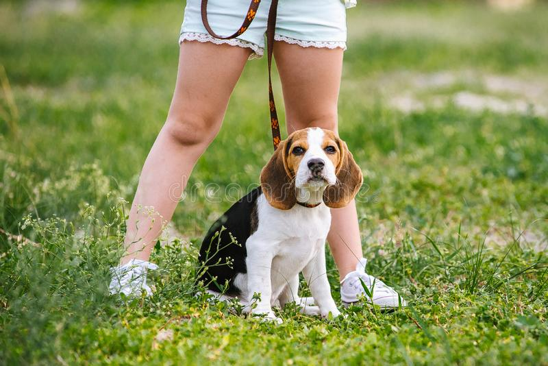 Cute little girl is playing with her dog in the green park stock photo