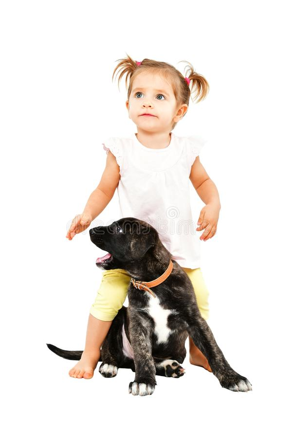Cute little girl playing with a puppy. Isolated on white background stock photo