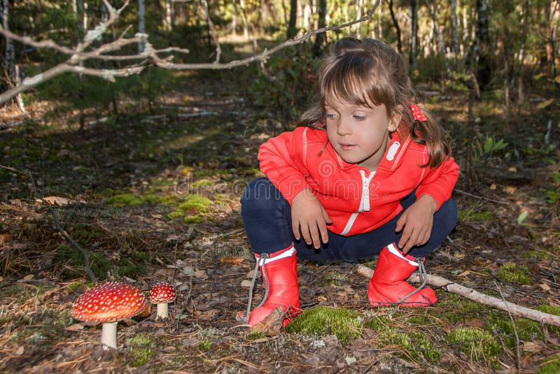 Cute little girl sits and looks at toxic amanita muscaria mushrooms in autumn forest. stock photography