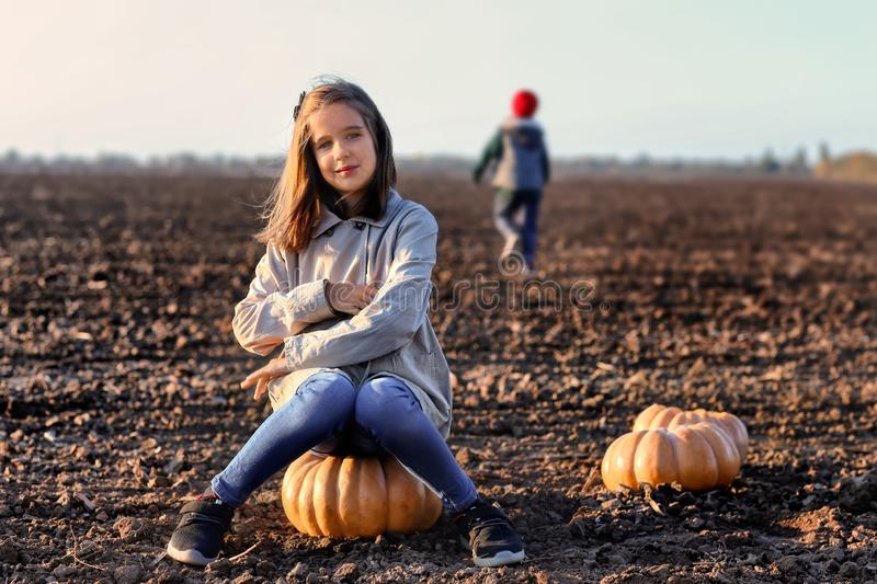 Cute little girl sitting on pumpkin in autumn field stock images