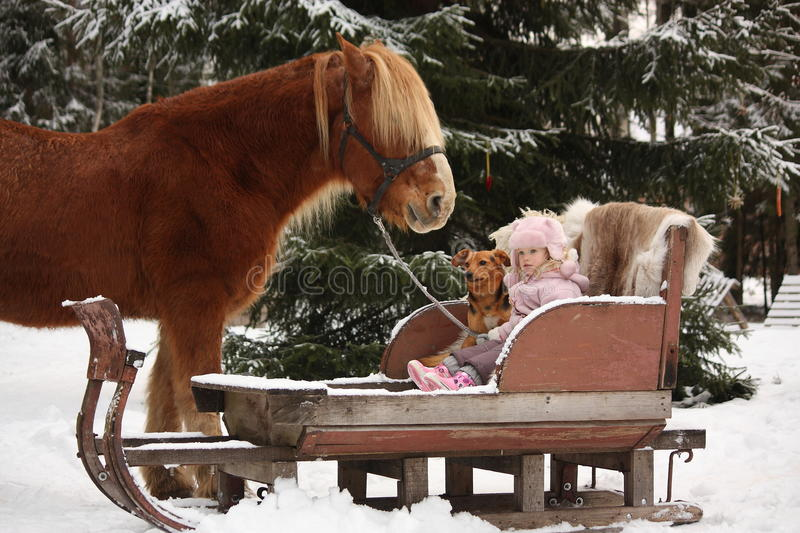 Cute little girl sitting in the sledges with puppy and big palomino draught horse stock images