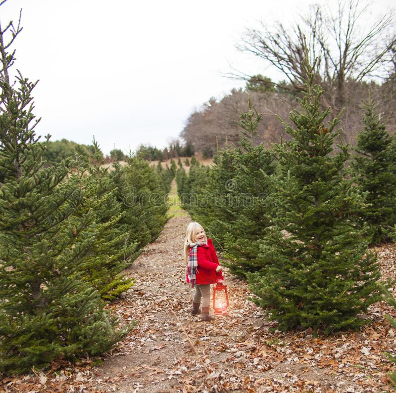 Cute little girl walking with lantern among fir trees royalty free stock photography