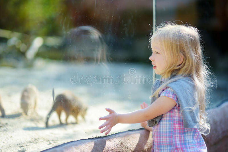 Cute little girl watching animals in the zoo on summer day. Child watching zoo animals through the window. Cute little girl watching animals in the zoo on warm stock photography