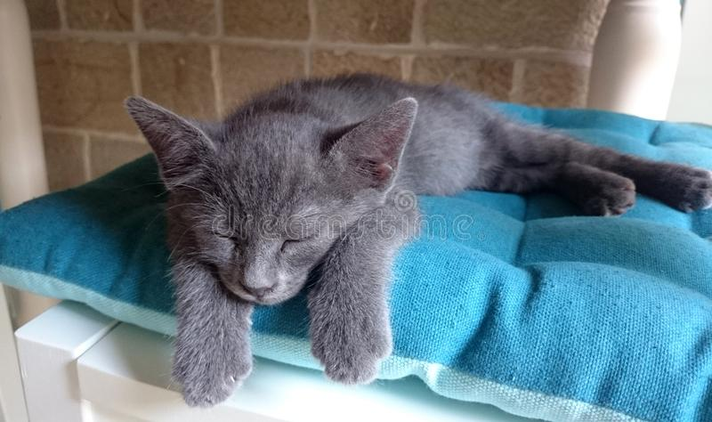 Little gray cat. Cute little gray cat sleeps on the white chair with a blue pillow royalty free stock images