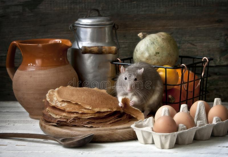 Cute little gray rat eats homemade pancakes. Still life composition in vintage style with live rat. Chinese New Year symbol royalty free stock images
