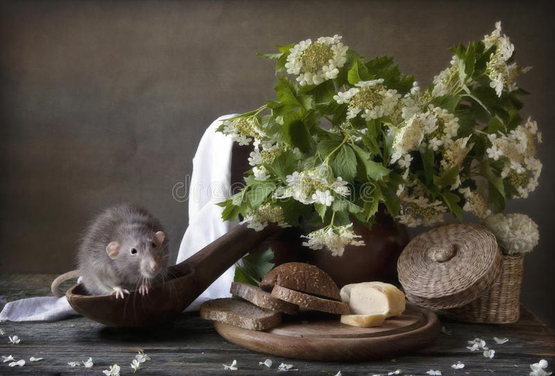 Cute little gray rat sits in a large wooden spoon with bread and cheese. Still life in vintage style with a live rat. Chinese New stock image