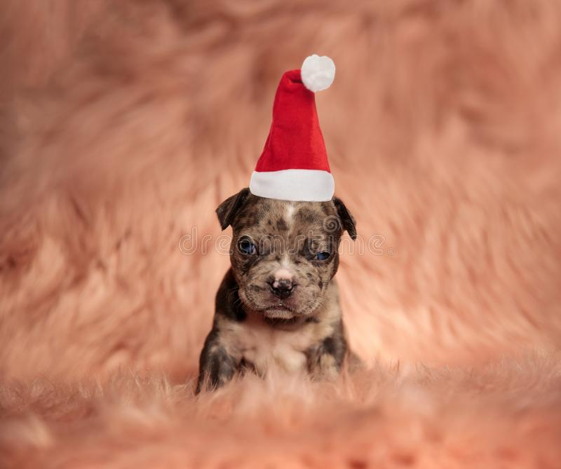 Cute little grinch puppy wearing santa hat royalty free stock photography