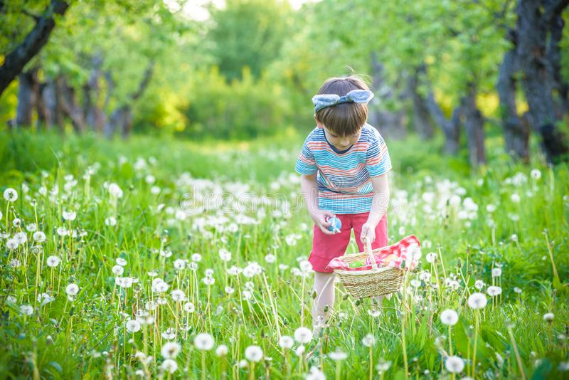 Cute little kid boy with bunny ears having fun with traditional Easter eggs hunt. On warm sunny day, outdoors. Celebrating Easter holiday stock photos