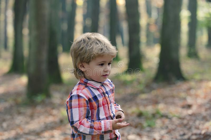 Cute little kid boy enjoying autumn day. Preschool child in colorful autumnal clothes having fun in garden or park on royalty free stock photo