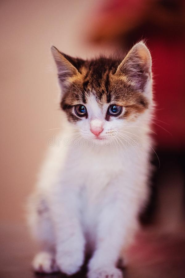 Cute little kitten with amazing eyes. Sweet baby. Lovely friend. Animal world royalty free stock photo