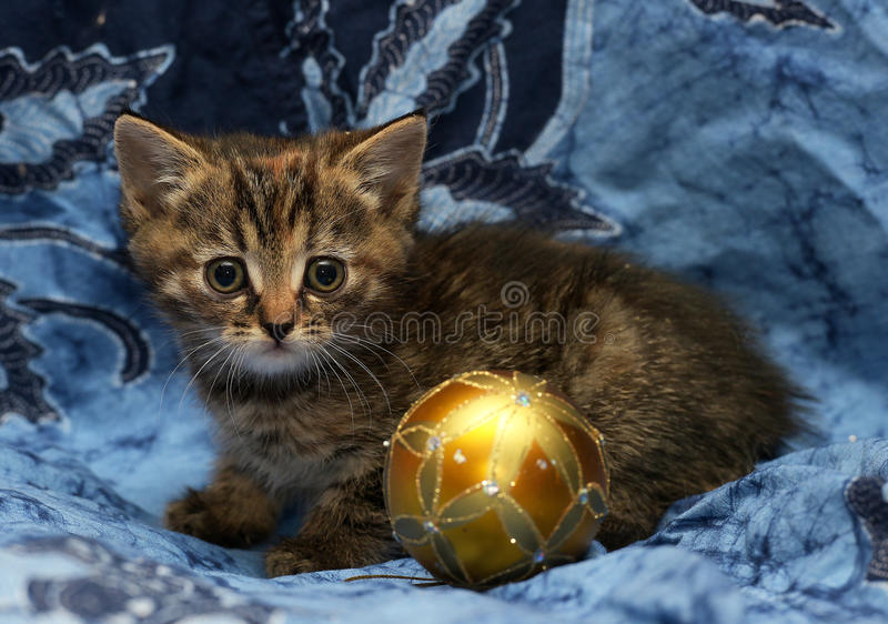 Cute little kitten on a blue background. And a Christmas ball Christmas toy stock image