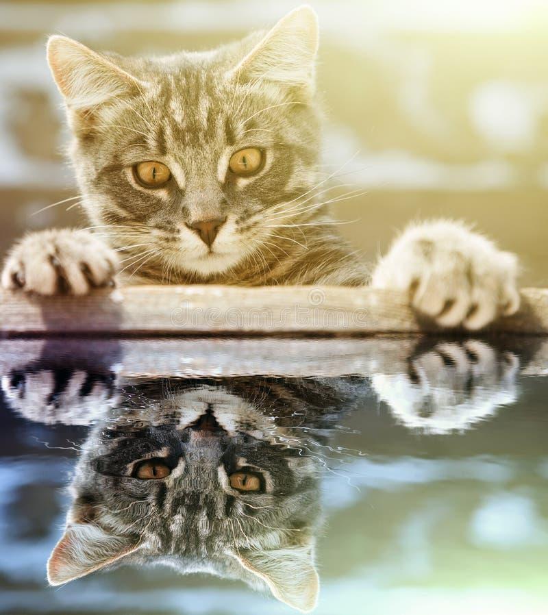 Cute little kitten crawling in the water. stock photo