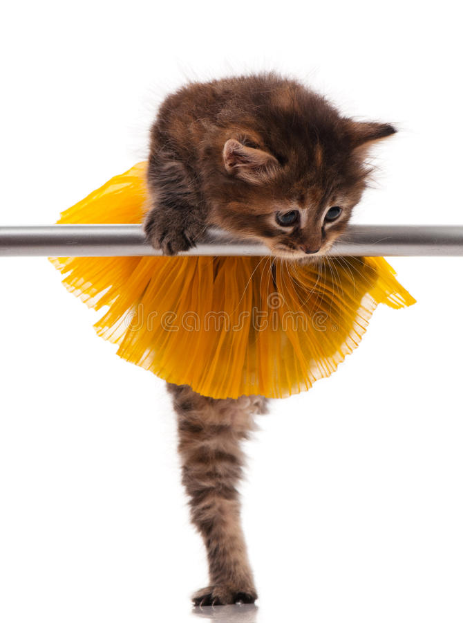 Cute little kitten. Dressed in the tutu posing near ballet barre over white background royalty free stock photos