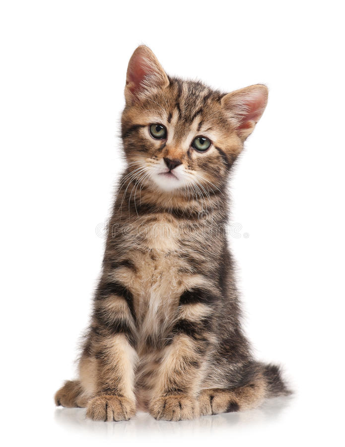 Cute little kitten. Isolated on white background royalty free stock photos