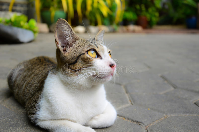 Download A Cute Little Kitten Looking At The Sky Stock Image - Image of sweet, focus: 23422531