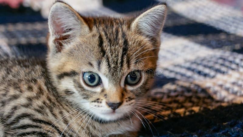 Cute little kitten lying on bed stock image
