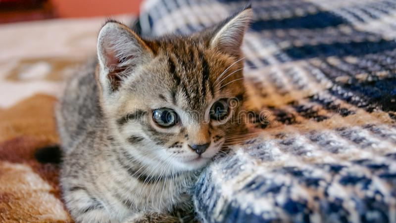Cute little kitten lying on bed royalty free stock images