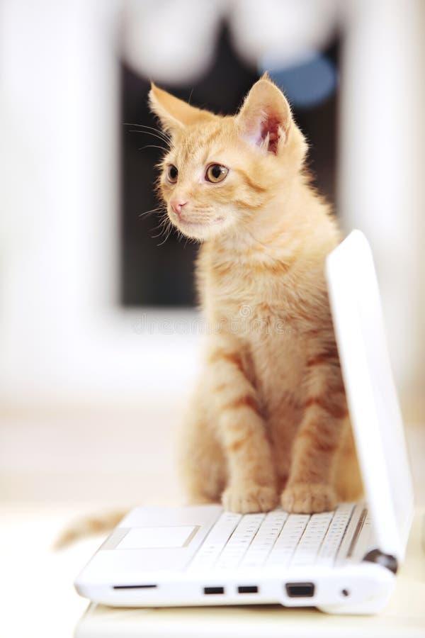 Cute little kitten on a notebook laptop royalty free stock photos