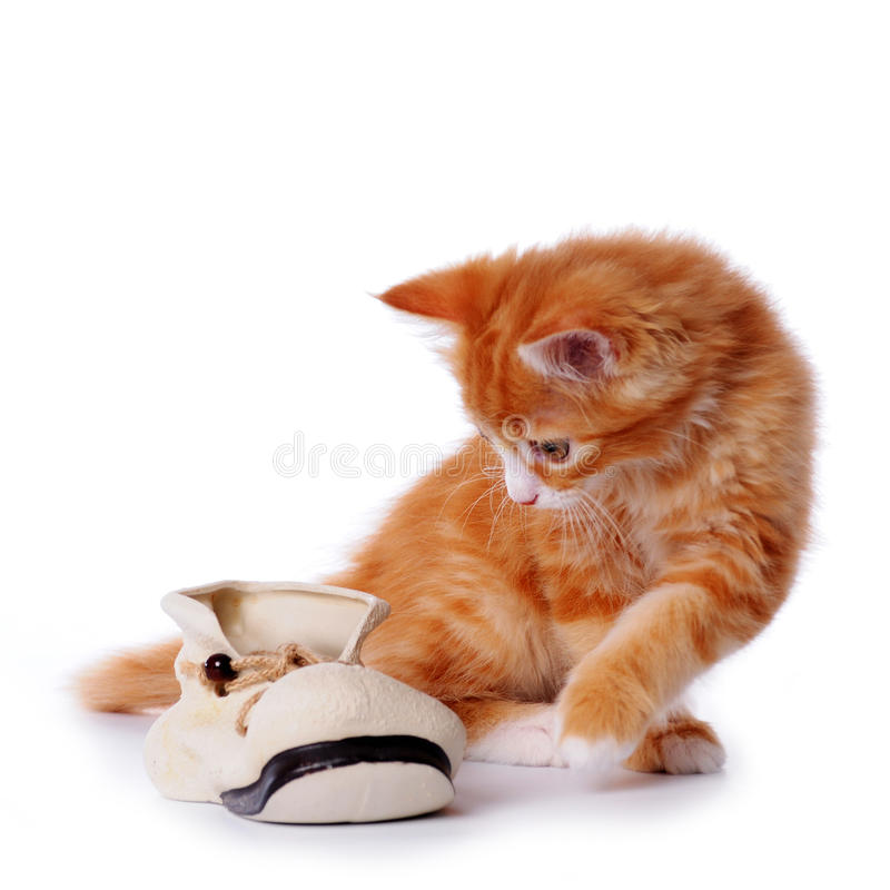 Cute little kitten playing with a shoe royalty free stock image