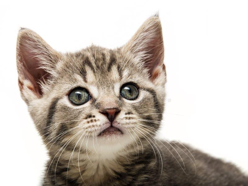 A cute little kitten portrait stock images