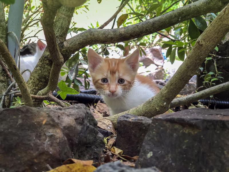Cute little kitten of red color startled look from under the tree. Summer sunny day stock photo