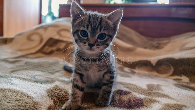 Cute little kitten sitting on bed royalty free stock photos