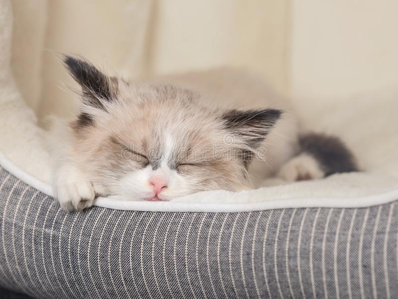 Cute little kitten sleeping in bed at home. Closeup royalty free stock photos