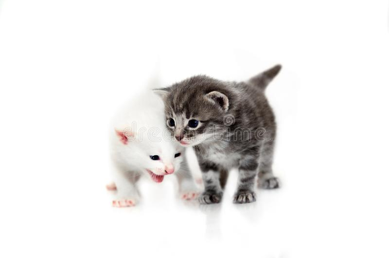 Cute little kittens isolated on white background stock image