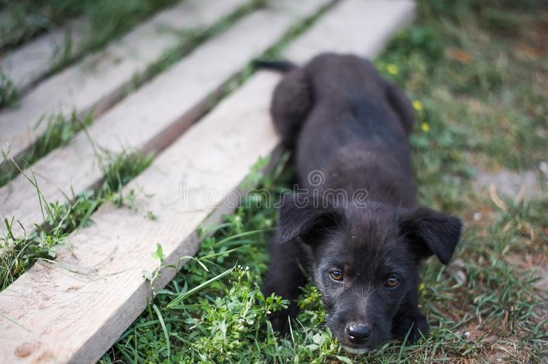 Cute little mongrel black puppy on the grass stock photo