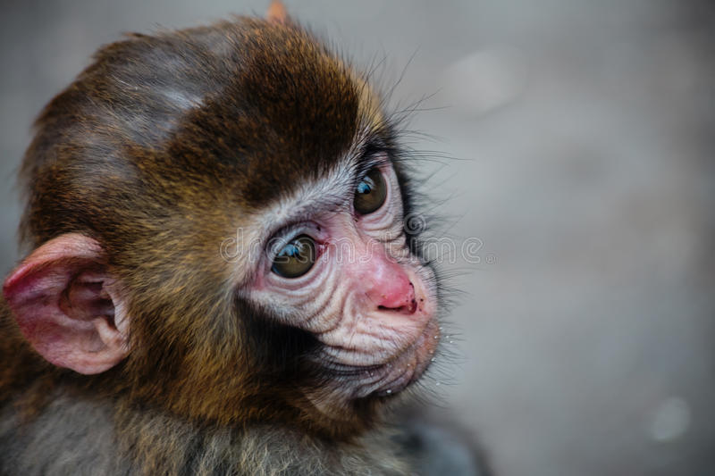 Cute little monkey. They live be light of heart from care, they are childish stock photos